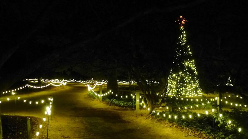 Christmas in Hopelands