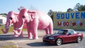 Pink Pachyderms