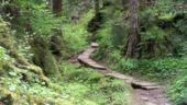 Barclay Lake Trail