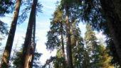 Tal -Trees