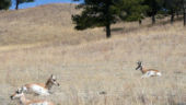 Antelope Rest