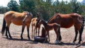 Baby Horsey